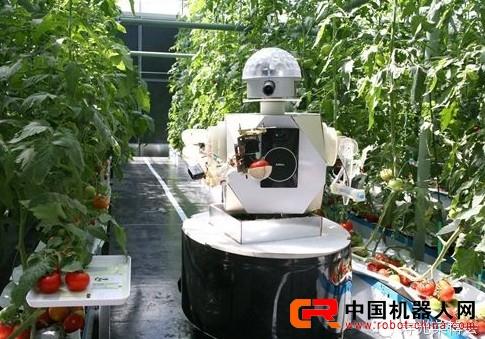 菜博会采用采摘机器人