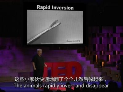 Robert Full:自然界最恶心生物的小秘密,运用到了机器人上