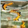 Estun长期寻求工业机器人领域的系统集成商和代理