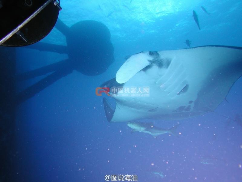 中国南海水下动物