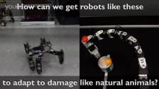 像动物一样行动的机器人
