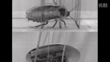 机器人模拟蟑螂通过障碍