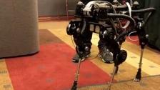 韩国的大狗机器人
