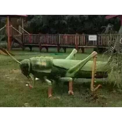 昆虫模型出租昆虫道具出租租赁仿真昆虫出租租赁