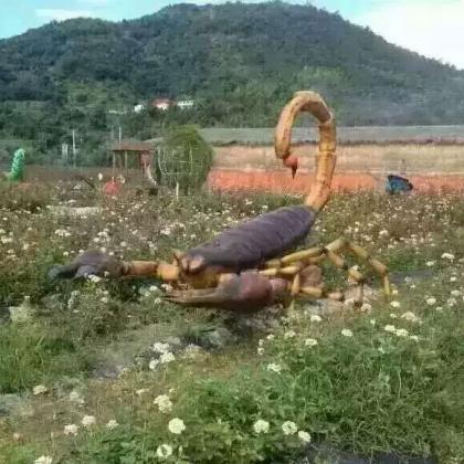 昆虫租赁请找山东百诺恐龙出租公司