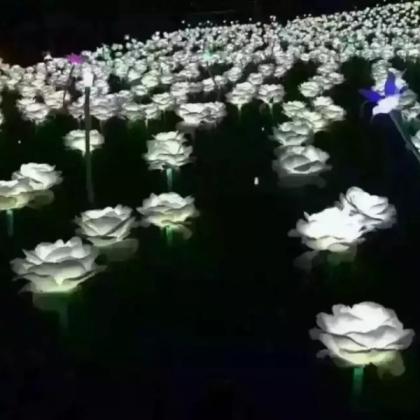 玫瑰花海出租公司在徐州 想出租玫瑰花海就选择徐州
