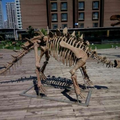 恐龙出租(出租恐龙)恐龙出售(全新或二手)