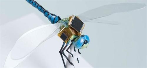 太可怕!活体动物基因改造 瞬间成机器人
