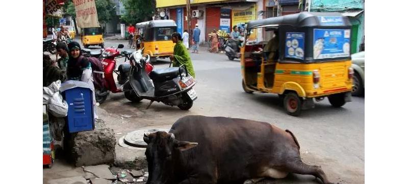 不允许无人驾驶汽车上路,印度交通部长的是非选择题