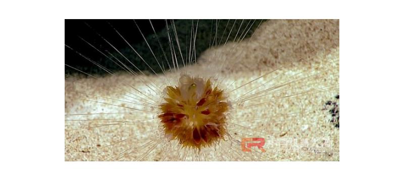 """水下机器人拍摄到""""怪异森林""""画面:神秘的发光生物,蜘蛛网般的触须"""