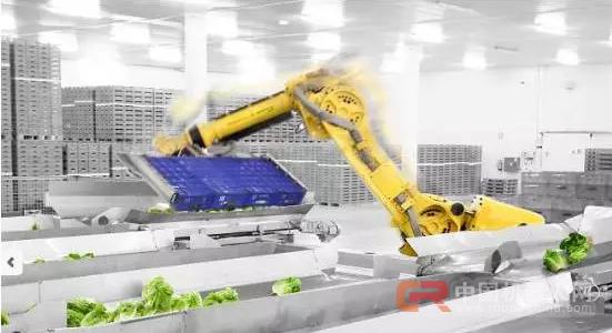 68台工业机器人日处理55万棵蔬菜,蔬菜工人面临下岗?