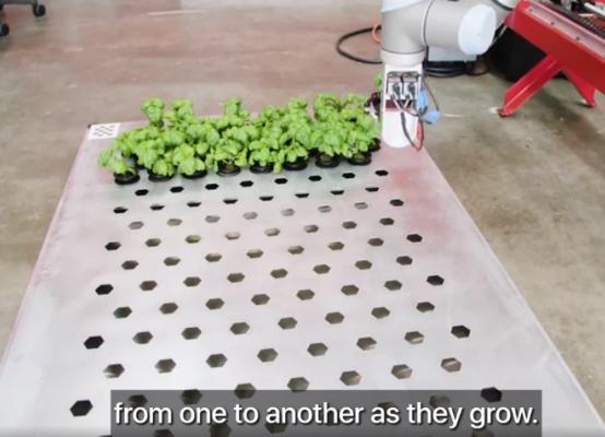 自主种蔬菜、无损摘水果,市场已经把人类的食物供应交给机器人了