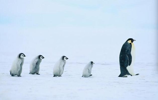 极地机器人:为研究海平面上升,科学家远赴南极,部署机器人实地考察