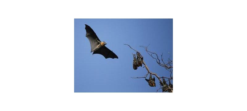 以色列研发出全自主类蝙蝠机器人,可依靠声呐系统感知并导航