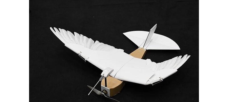 科学家制造出鸽子机器人 插满40根羽毛俯冲急转毫不费力