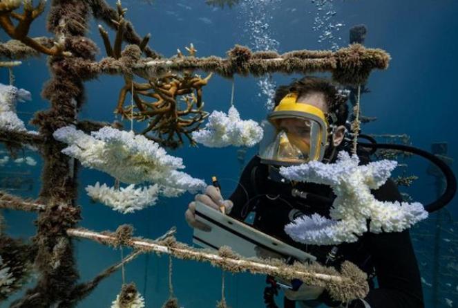 机器人潜水员可以使用人工智能来拯救珊瑚礁