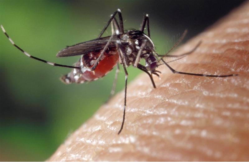 为防蚊人类也是拼了 核技术和无人机都上了