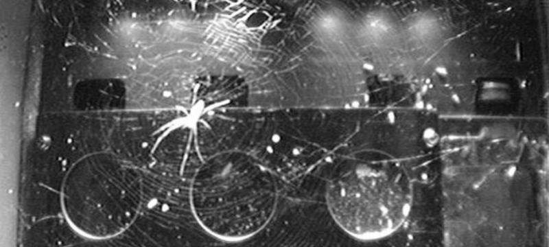 柔软的机器人:韩国创造离子蛛网,可捕获自重68倍物体
